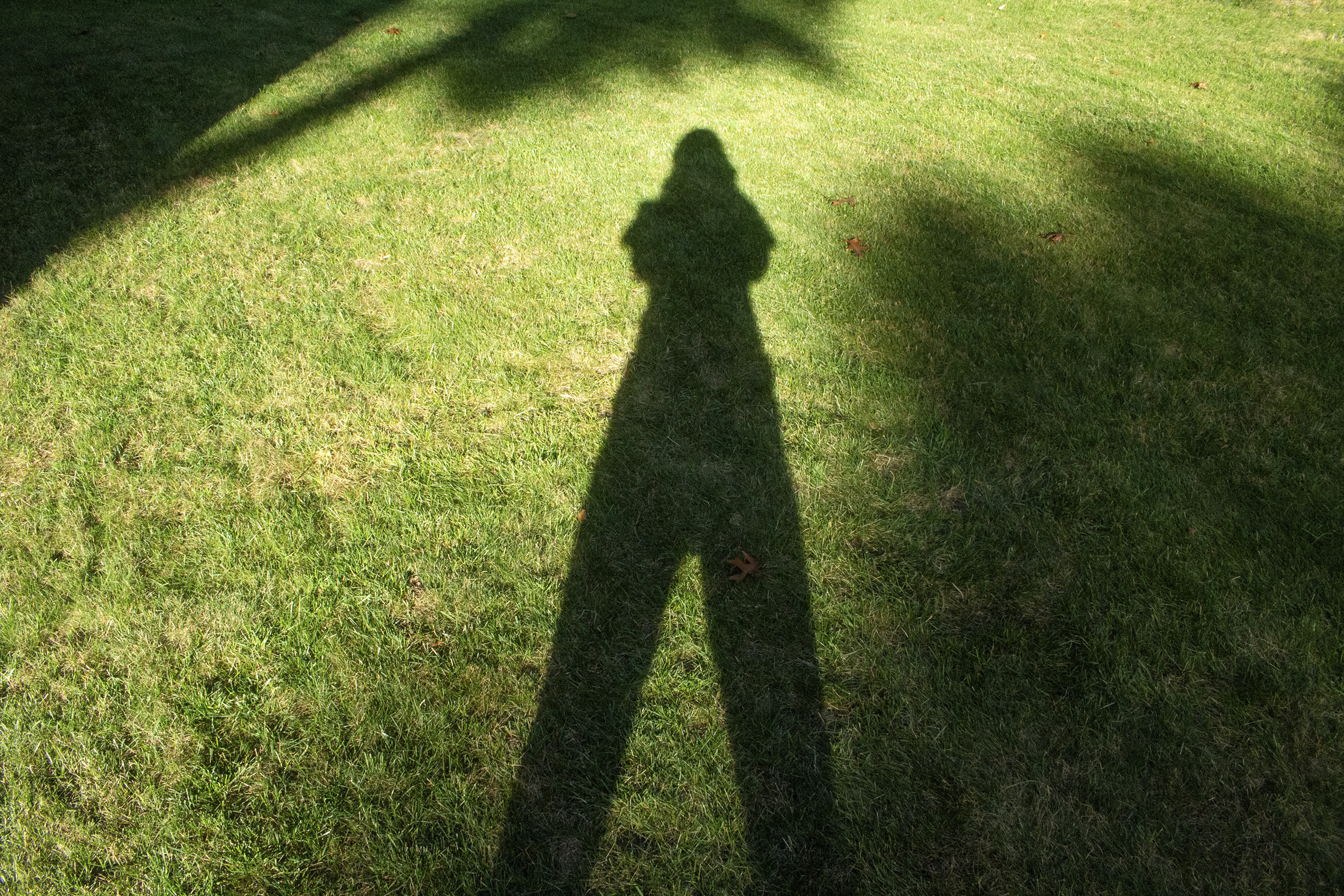 photograph of Katie May Howarth's shadow on a lawn of bright green grass
